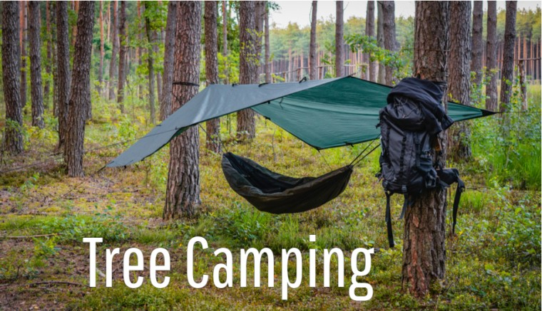 Tree Camping Outdoor Sports